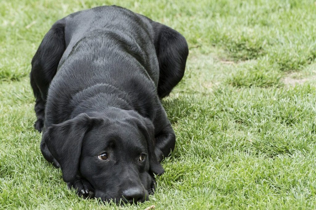 A McKenzie Friend can help to banish the `black dog'.