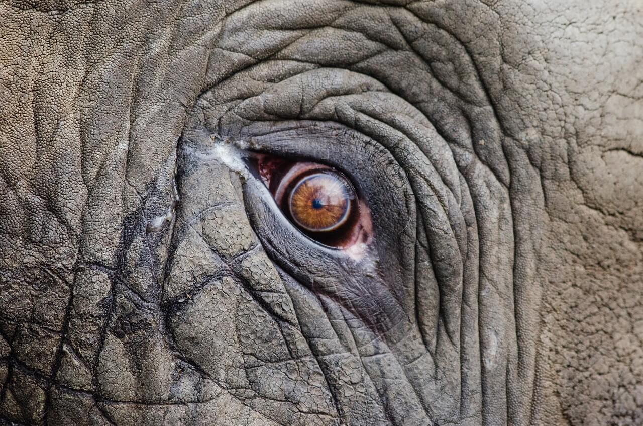 Self care - the elephant in the room in the family courts